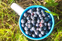 Cup with fresh berries Stock Image
