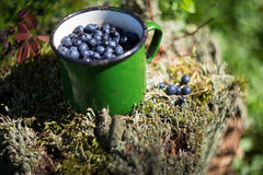 Cup of fresh blueberries on a stump with moss in a forest in summer. Photographed close-up with shallow depth of field Royalty Free Stock Photo