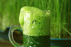 Cup Fresh Green Wheat grass Juice - Drink Stock Images
