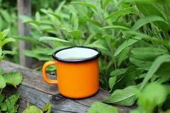 Cup of fresh herbal tea stock photos