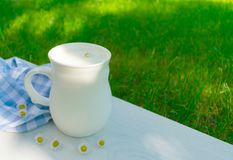 A cup of fresh milk and white daisies on a background of green grass. stock image