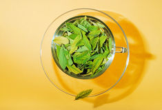 Cup full of leaves, freshness Royalty Free Stock Image