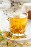 Cup golden linden tea Stock Photography