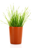 Cup with grass isolated Stock Photos