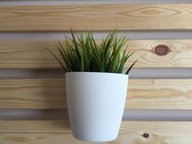 The cup. With grass on the wall Stock Photo