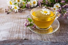 Cup of green herbal camomile tea and herbs Stock Photos