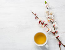 Cup of green tea and  branches of blossoming apricot Stock Photos
