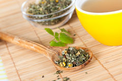 Cup of green tea with herbs Stock Images