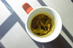 A cup of green tea in natural lightining Royalty Free Stock Images