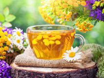 Cup of healthy tancy tea and healing herbs. Royalty Free Stock Photography