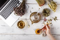 Cup of healthy tea, honey, healing herbs, herbal tea assortment and berries on table. Top view. Herbal medicine. Royalty Free Stock Images