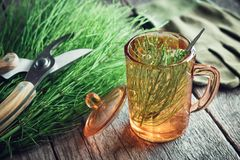 Cup of healthy tea or infusion, bunch of horsetail healing herbs, pruner and gloves. Stock Photography