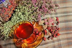 Cup of herbal oregano tea Stock Photo