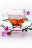 Cup of herbal tea Stock Image