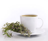 Cup of herbal tea Stock Photos