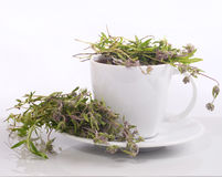 Cup of herbal tea Stock Photo