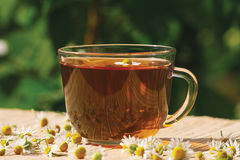 Cup of herbal tea and chamomile Royalty Free Stock Images