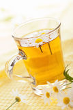 Cup of herbal tea with chamomile flowers Stock Images