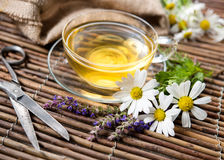 Cup of herbal tea Stock Image