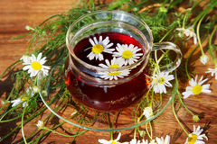 Cup of herbal tea with chamomile flowers Royalty Free Stock Photos