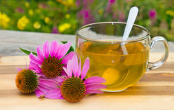 Cup of herbal tea from echinacea. Royalty Free Stock Images