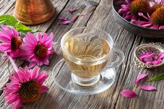 A cup of herbal tea with fresh echinacea flowers stock images