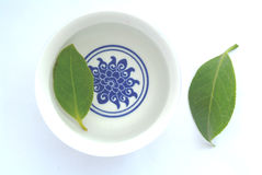 Cup of herbal tea. With green leaf royalty free stock photography