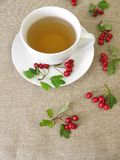 Herbal tea with hawthorn herbs Royalty Free Stock Photography