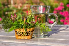 Cup of herbal tea for medical use. Royalty Free Stock Photo