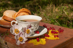 A cup of herbal tea, a plate of fresh pastry, yellow autumn leaves, ripe red currants and garden flowers on a wooden surface Royalty Free Stock Photography