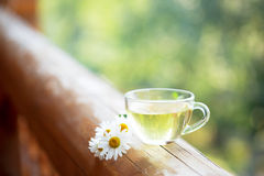 Cup of herbal tea. Stock Images