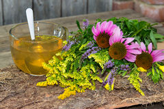 Cup of herbal tea from solidago and echinacea. Cup of herbal tea or infusion from solidago and echinacea two healing plant for many diseases Royalty Free Stock Images