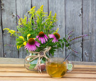 Cup of herbal tea from solidago and echinacea. Royalty Free Stock Image
