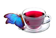 Cup of hibiscus tea and morpho butterfly isolated on white. Tropical butterfly and hibiscus tea Vitamin tea for cold and flu. Herb. Cup of hibiscus tea and stock photo
