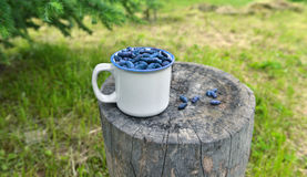 Cup with honeyberry on stub horizontal Royalty Free Stock Photos