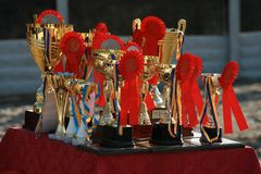Cup of horses endurance with red rosettes royalty free stock photos