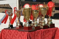 Cup of horses endurance on the table with rosettes stock photos