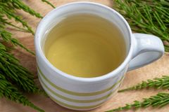 A cup of horsetail tea with fresh Equisetum arvense plant. On a table stock image