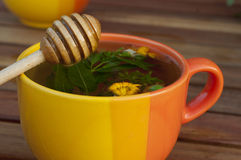 Cup of hot herbal tea Royalty Free Stock Images