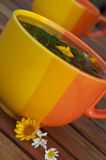 Cup of hot herbal tea on a table Stock Photos