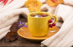 Cup of hot tea and autumn leaves Royalty Free Stock Image