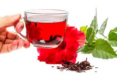 Cup of hot tea hibiscus Royalty Free Stock Photos