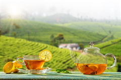 Cup of hot tea with plantation on background Royalty Free Stock Photos