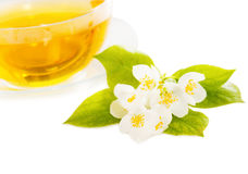 Cup of the jasmin tea isolated Stock Photos