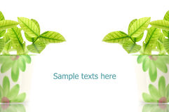 Cup of Leaves. Pattern of  leaves on white background Stock Photos