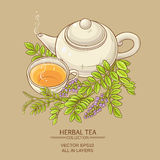 Cup of licorice tea and teapot Stock Image