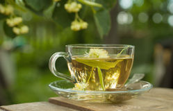 Cup of linden tea Stock Images