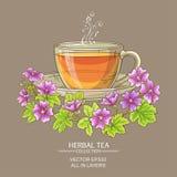 Cup of malva tea Stock Images