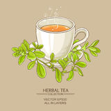Cup of marjoram tea Royalty Free Stock Photography