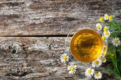 Cup of medicinal chamomile Stock Image